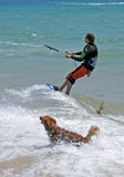 Man kitesurfing with golden retriever dog chasing him. Man starting kitesurfing with pet golden retriever dog chasing him through the waves royalty free stock photo
