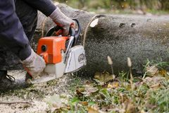 Man on the knee surrounded with sawdust cutting fallen tree with stock images