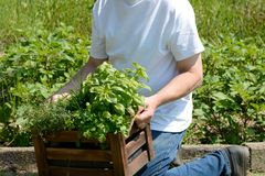 Man kneeling with box of herbs Royalty Free Stock Photos