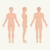 Man kroppanatomi, bekläda, tillbaka och sidan Royaltyfri Foto
