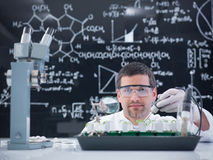 Man lab plant experiment Royalty Free Stock Photo