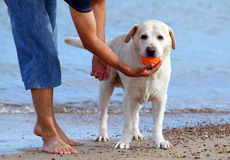 A man and a labrador at the sea Royalty Free Stock Photography