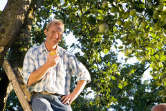 Man on ladder with apple in orchard, smiling, portrait, low angle view Stock Image