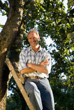 Man on ladder in orchard, arms crossed, smiling, portrait, low angle view Royalty Free Stock Images