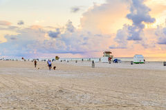 Man in late afternoon walks along south beach with his dogs Stock Photos