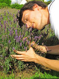 Man in lavender field Royalty Free Stock Photo