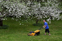 Man with lawn mower in garden, blooming apple trees Royalty Free Stock Photography