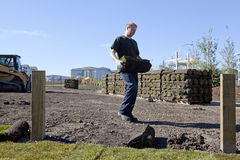 Man laying turf, Alberta, Canada Stock Image