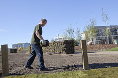 Man laying turf, Alberta, Canada Stock Photo