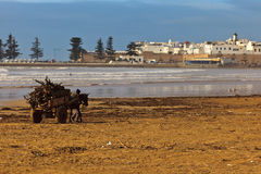 Man leading donkey cart across beach Stock Images