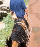 Man leads a horse. In the park in nature Royalty Free Stock Photography