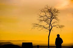 A man with a leafless tree royalty free stock photography