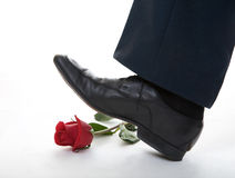 Man leg step on the rose Royalty Free Stock Image