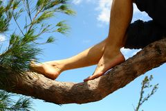 Man leg in a tree Royalty Free Stock Image