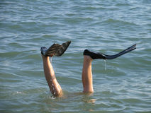 Man legs in flippers sticking out of water. Young man legs in flippers sticking out of water Royalty Free Stock Photos