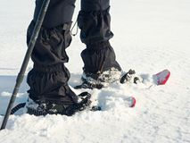 Man legs with snowshoes walk in snow. Detail of winter hike in snowdrift. Snowshoeing with trekking poles and shoe cover in powder snow. Red plastic snowshoes royalty free stock photography