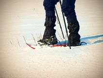 Man legs with snowshoes walk in snow. Detail of winter hike in snowdrift, snowshoeing Stock Image