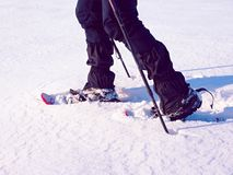 Man legs with snowshoes walk in snow. Detail of winter hike in snowdrift, snowshoeing Royalty Free Stock Photo