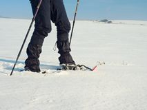 Man legs with snowshoes walk in snow. Detail of winter hike in snowdrift, snowshoeing Royalty Free Stock Image
