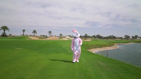 Man in life size Easter bunny costume or rabbit jumps, walks, runs, have fun on grass or garden. Hare celebrates easter.  stock video footage