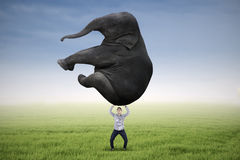 Man lifting heavy elephant. Asian man is lifting heavy elephant on the meadow Royalty Free Stock Image