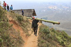 Man living in Sapa, in north Vietnam, carrying a bamboo stake walking in a narrow path in the mountains of Sapa Royalty Free Stock Photography