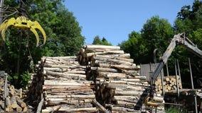 Man load log transport Royalty Free Stock Images