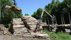 Man load log transport Royalty Free Stock Image