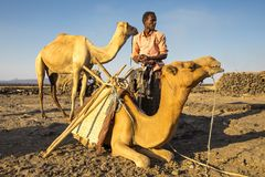 Man loading his camels at the Erta Ale base camp for the night`s trek up to the volcano. stock photography