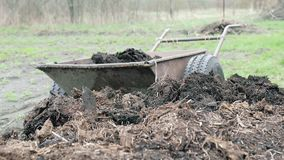 Man loads organic fertilizer in a wheelbarrow on his own farm. Manual labor. Close up stock video