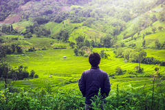 Man look Terrace rice fields in Chiangmai Thailand. Stock Photos