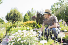 Man looking away while gardening at plant nursery Royalty Free Stock Photography