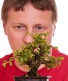 Man is looking at a bonsai tree Royalty Free Stock Photography