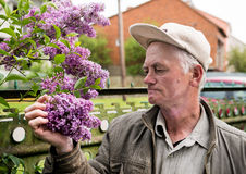 Man looking at branch of lilac Stock Images