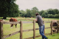 Man looking the cows Stock Photos