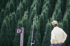 Man looking at fir trees Royalty Free Stock Image