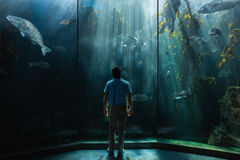 Man looking at fish tank Royalty Free Stock Photos