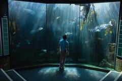 Man looking at fish tank Stock Photography