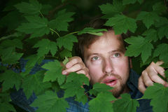 Man looking through the foliage. At a mysterious scene Royalty Free Stock Images