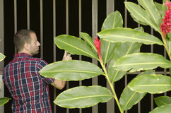 Man looking into gated area. Man looking into gated area with a plaid shirt and a tropical plant Royalty Free Stock Photos