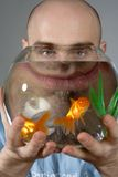Man Looking Through Goldfish Bowl Royalty Free Stock Photo