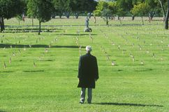 Man Looking at Graves Royalty Free Stock Images