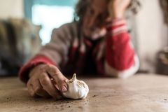 Man looking at a home grown bulb of fresh garlic Royalty Free Stock Images