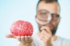 Man looking at human brain stock image