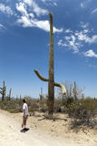 Man Looking at Large Sagauro Cactus Stock Photography