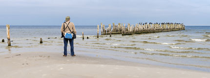 Man looking at old broken pier with sitting birds on it. Image was taken at the Baltic Sea, Europe stock photography