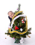 Man looking out of Christmas tree. Man hiding behind christmas tree Stock Photography