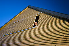Man looking out of window Royalty Free Stock Photos
