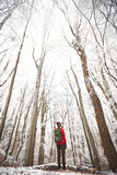 Man looking to winter tree`s top. Young man in snowy winter forest. Snowfall. Guy looking away on trees tops Royalty Free Stock Photo