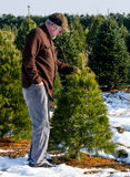 Man looking at trees at a tree farm Stock Images